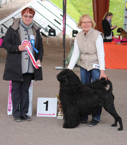 Best Veteran (Saturday, 23 May 2015) - Winners of the International Dog Show in Hamina (Finland), 23 - 24 May 2015